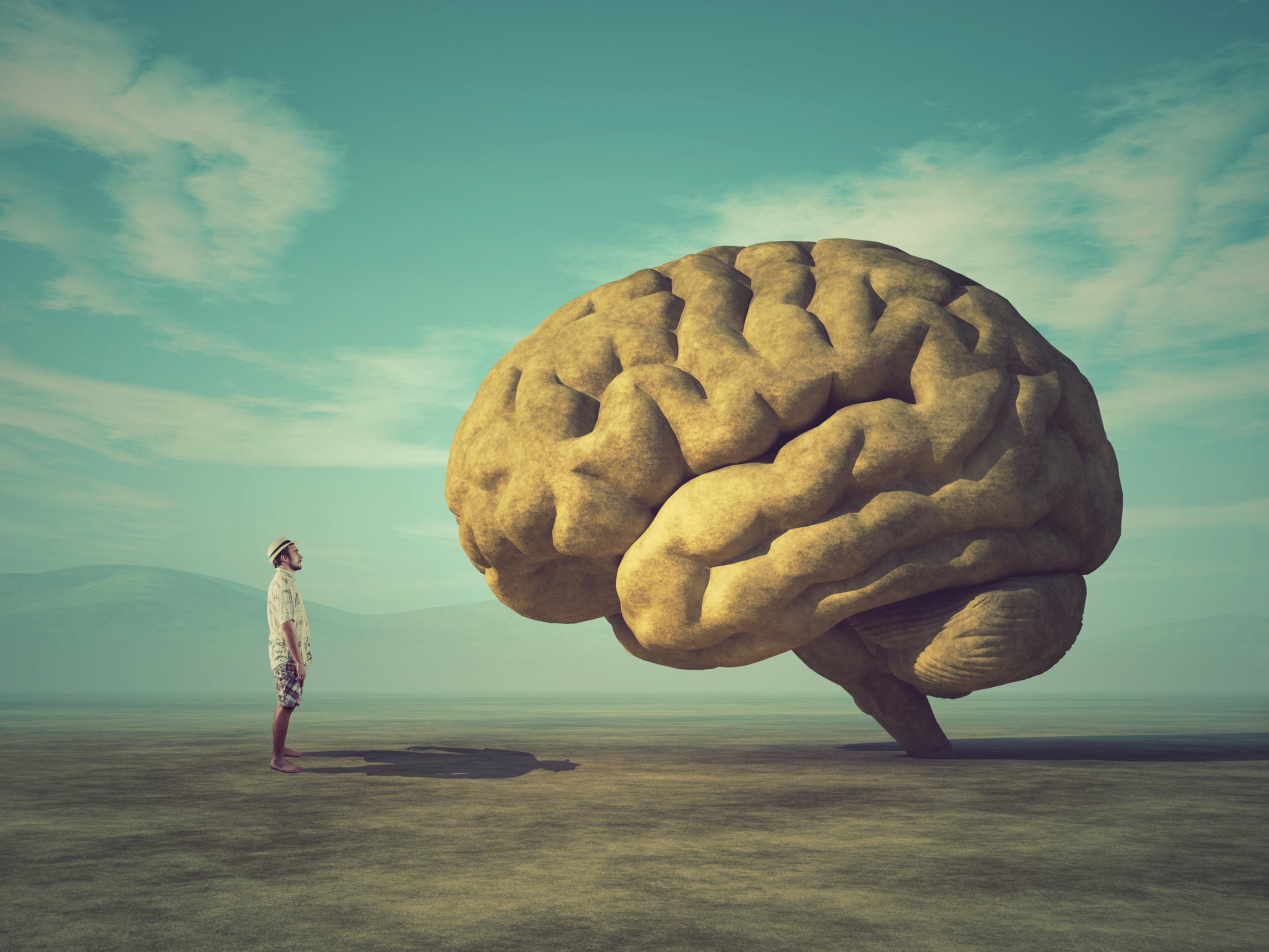 Gehirn -Psyche