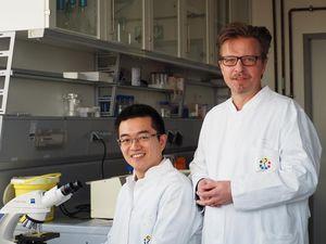 Jürgen C. Becker (rechts) mit Doktoranden Kaiji Fan (Foto: UDE/UK Essen)