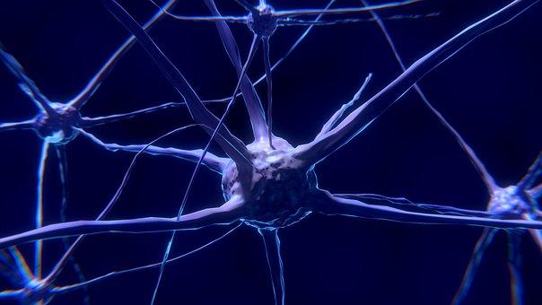 https://pixabay.com/en/photos/neuronen/