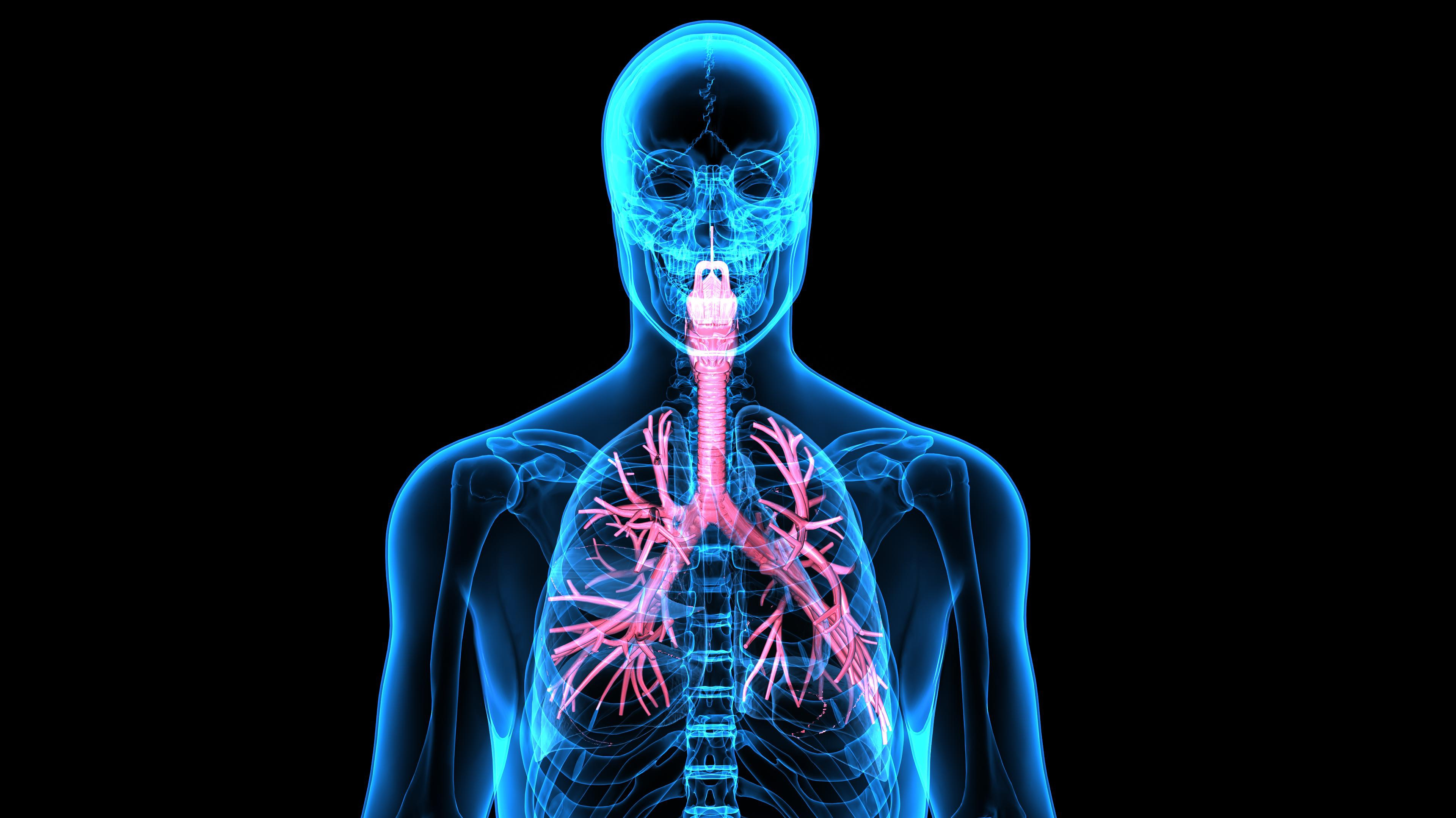 3dillustration Human Respiratory System Pflege Professionell