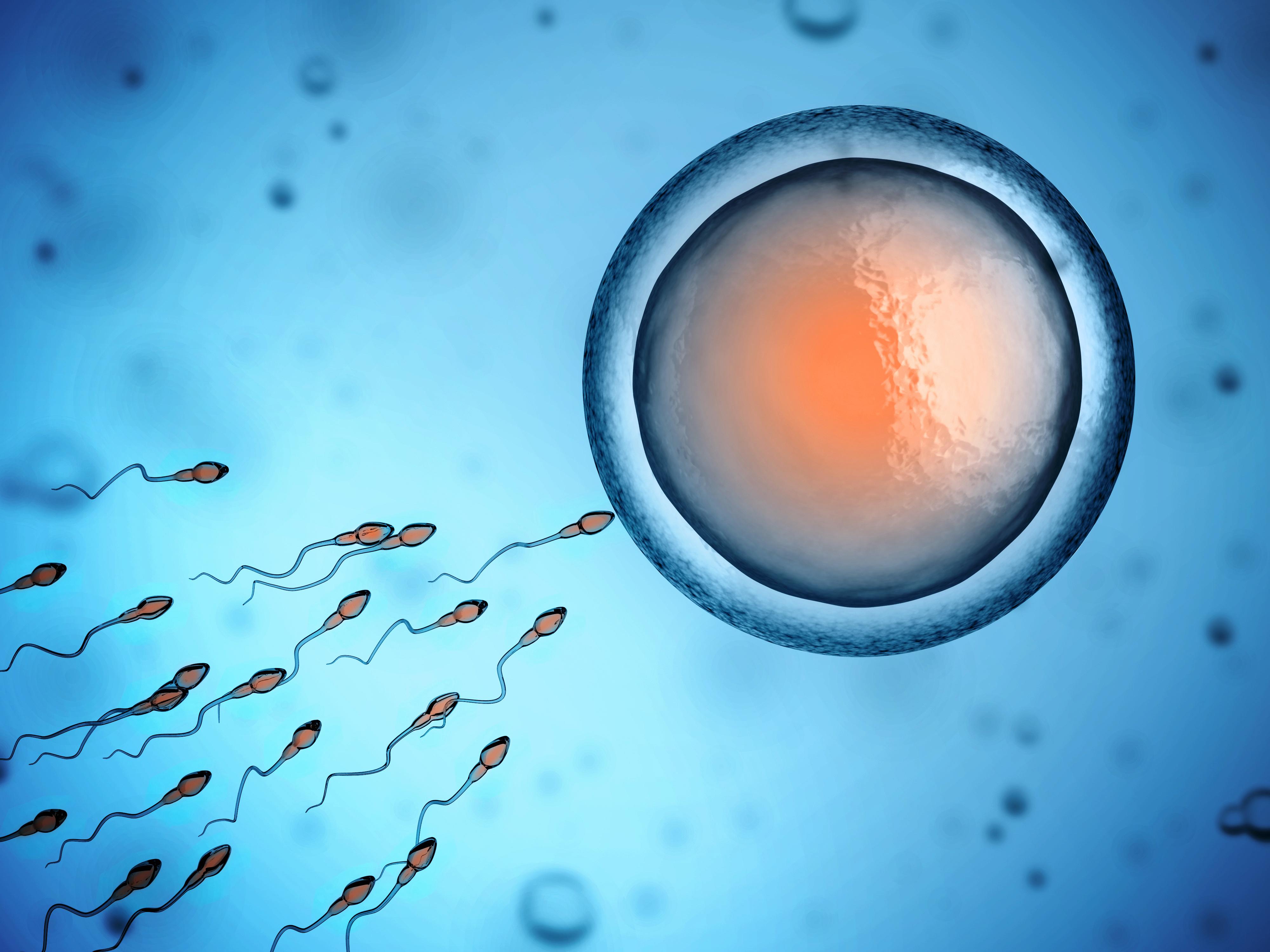Sperma, Eizelle, Befruchtung